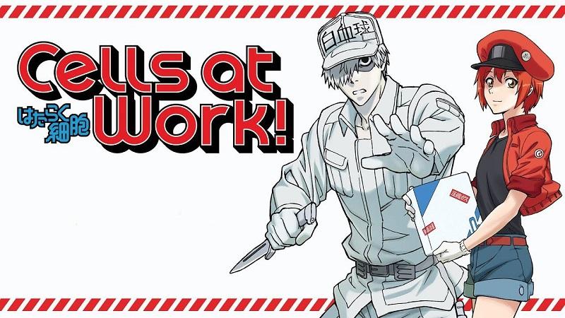 Cells at Work! Nonton Anime Sambil Belajar Anatomi Tubuh!